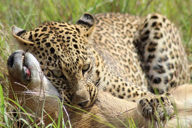 7 days safaris in Kenya
