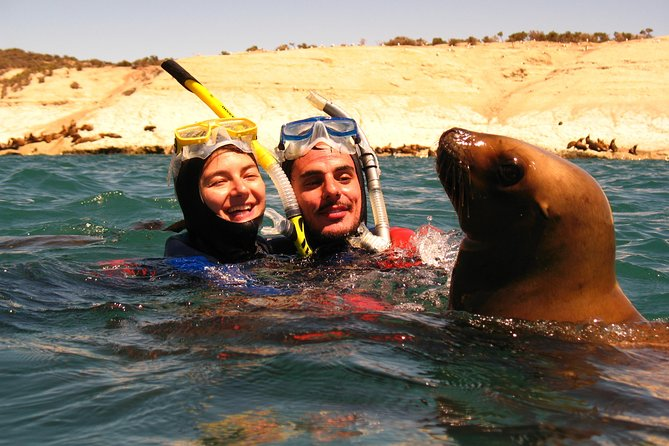 Snorkeling with Sea Lions by Master Divers Patagonia