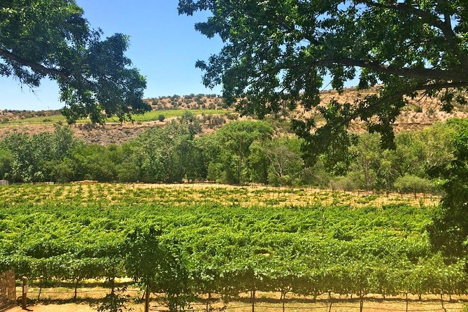 Beautiful Verde Valley Vines