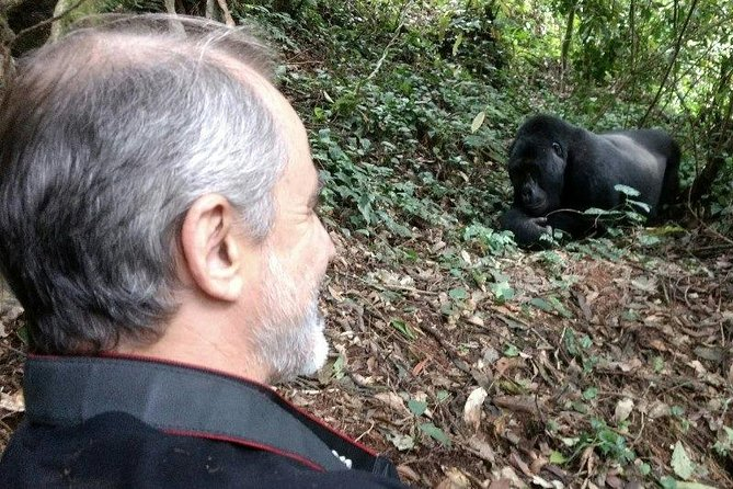 7 Days Double Gorilla Trek And Game Viewing Experience