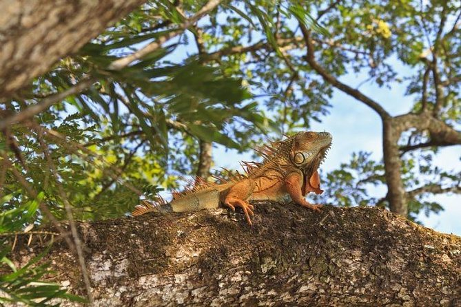 Palo Verde National Park Group Tours