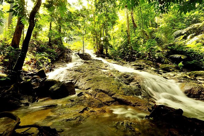 A Day In The Rainforest (FRIM)