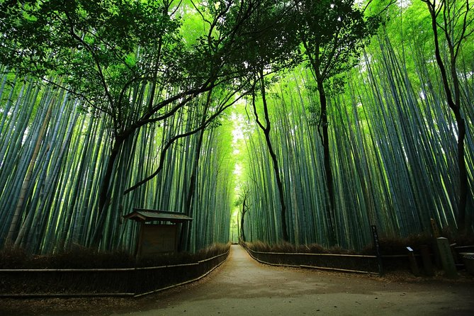 Kyoto Arashiyama & Sagano Bamboo Private Tour with Nationally-Licensed Guide