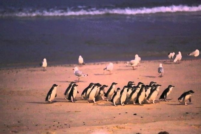 Private - Phillip Island Tour With Penguin Parade, Wildlife & Lunch photo 4
