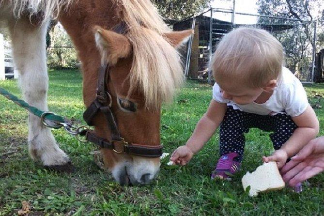 Pony Ride in Tuscany