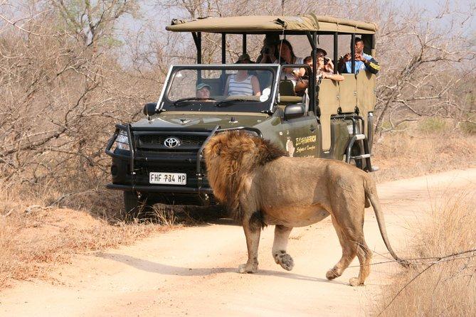 Kruger National Park - Wildlife Safari
