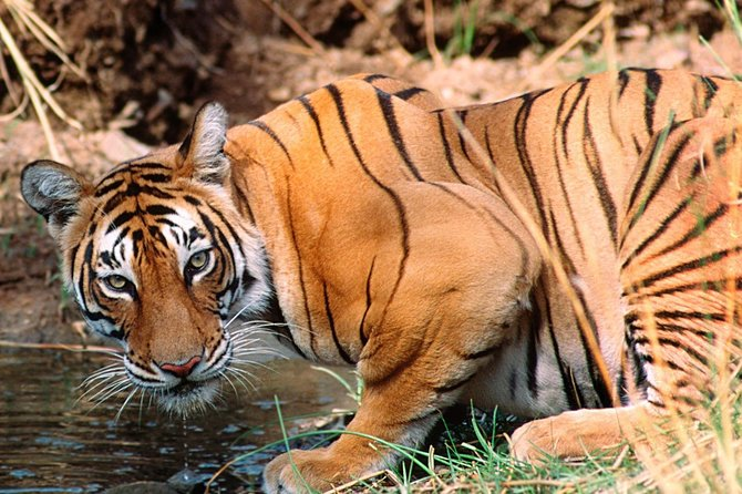 Private 4-Day Ranthambhore Tiger Safari Tour to Agra and Jaipur from Delhi
