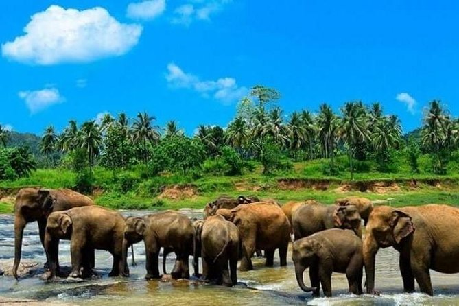 Kandy Day Trip with Tea Factory From Ahungalla & Kosgoda areas - All Inclusive