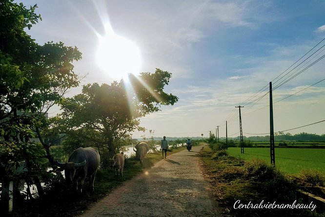 Cycling Tour To Thanh Toan Covered Bridge photo 3