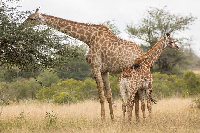 2Days Tanzania Safari Tarangire & Ngorongoro Crater With Burigi Chato Safaris