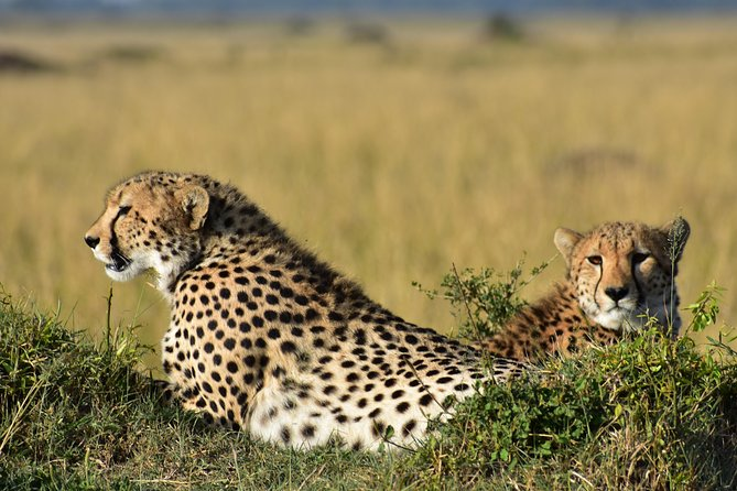 1 Day Safari Arusha National Park .....