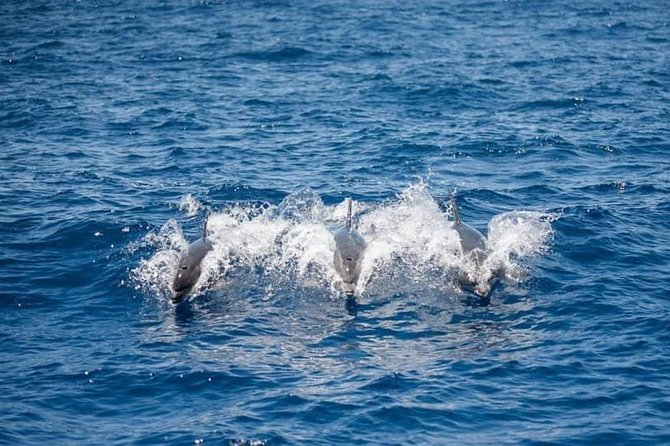 3 Hour All Inclusive Whale & Dolphin Watching Yacht Trip photo 7