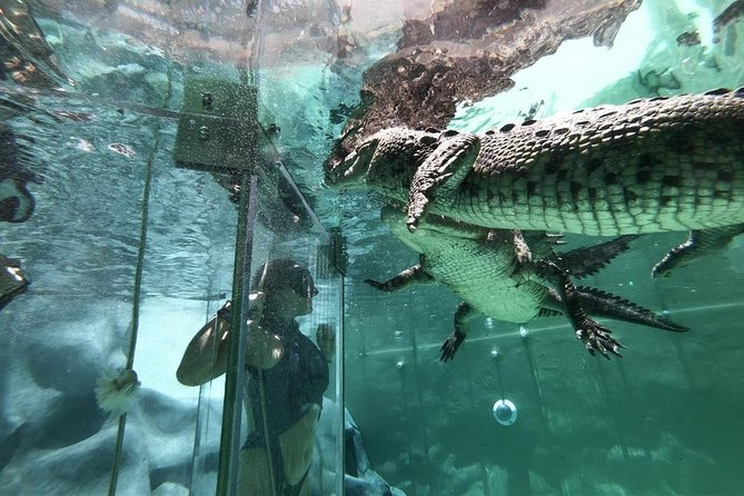 Ultimate Adrenaline Cage Diving Croc & Wildlife Encounter in Cabo