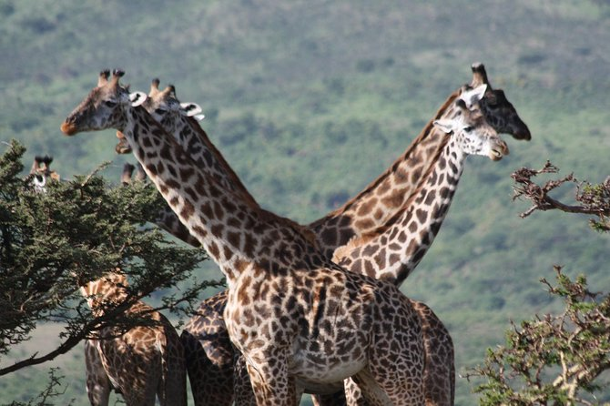5 Days Northern Tanzania Selected Wildlife Safari