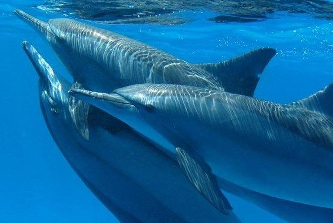 4 Hours Dolphin House By a Speed Boat & Water Sports- (Semi Private) - Hurghada