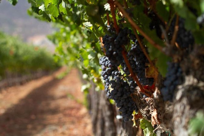 Valle de Guadalupe Wine Tour, All Inclusive by AKA Expeditions.