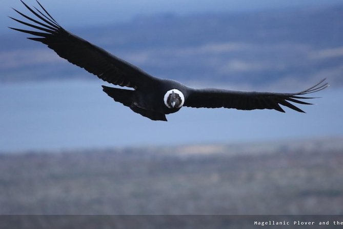Wildlife Day observation around Punta Arenas