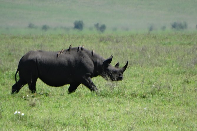 Tarangire NP and Ngorongoro Crater 2 Days 1 Night Safari