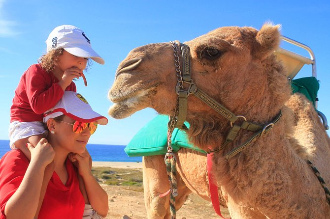 Cabo Camel Encounter and Safari Ride (includes tacos & tequila tasting)