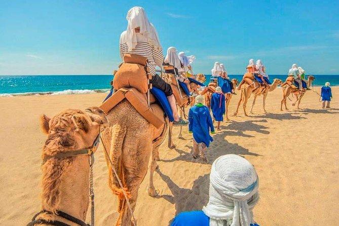 Camel Safari - Los Cabos