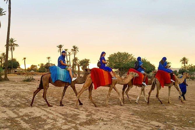Marrakech Palmerie By Camel Ride