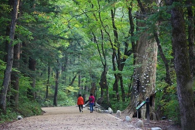 3D2N / Get lost in Gangwon's mother nature photo 6