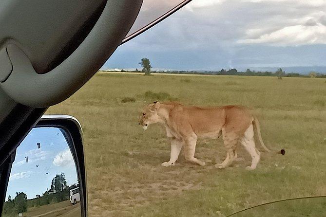 4 Days Maasai Mara & L. Nakuru N. Park