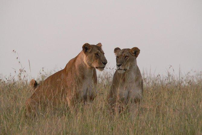 Nairobi layover