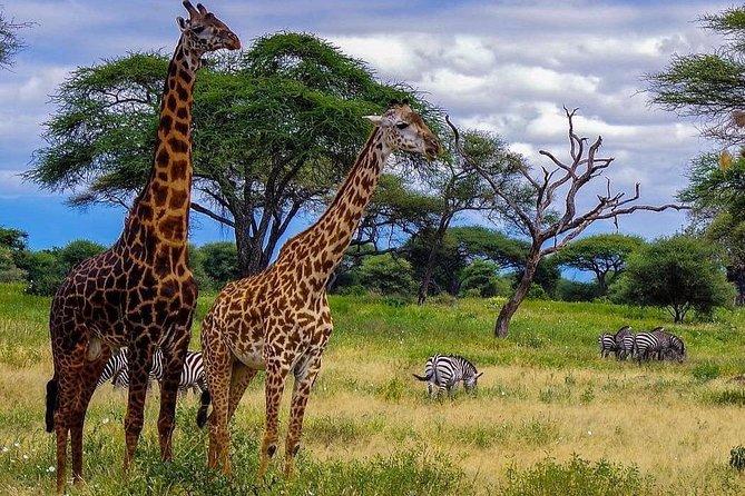 4 Days amazing Camping safari