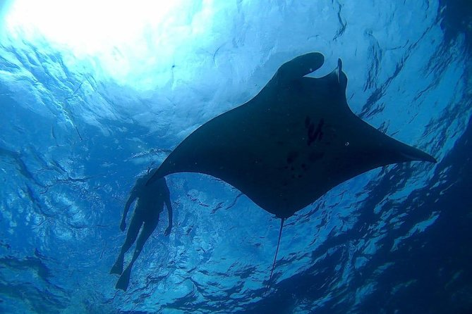 Snorkeling Safari Manta Point Nusa penida