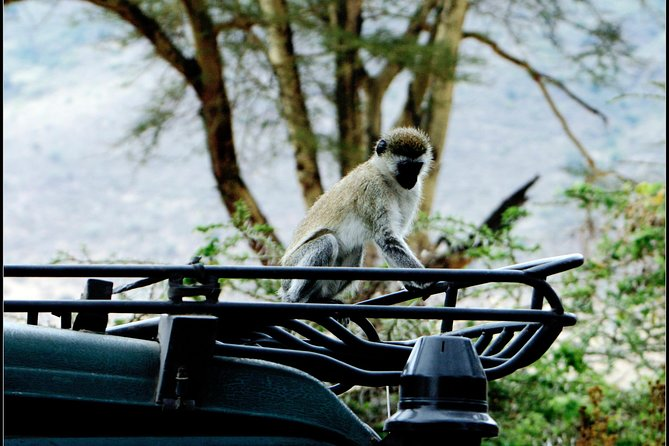 TANZANIA EXPERIENCE;4 Days Photographic wildlife Safari,Serengeti&Ngorongo