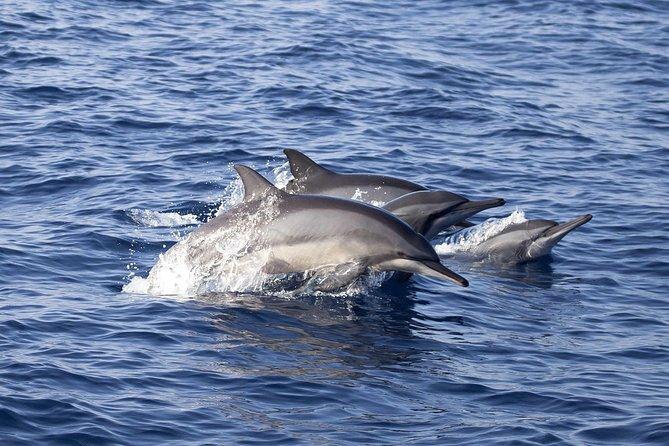 Whale & Dolphin Watching Full Day Tour in Kalpitiya