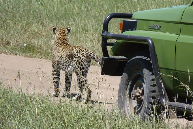 Serengeti and Ngorongoro Crater 3 days photo 11