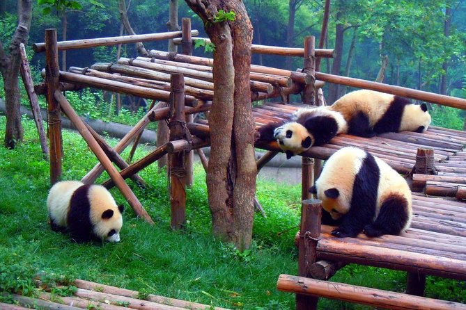 Chengdu Private Day Tour: Panda Breeding Base and Leshan Buddha with Lunch