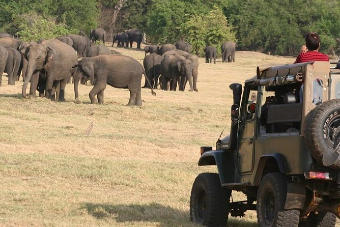 Eephant watching safari-Minneriya national Park