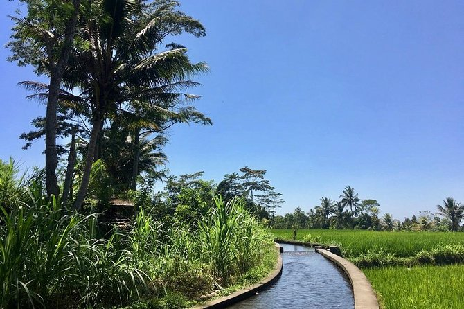 Bali Secret Cycling Tour Above Ubud, Jungle-Swing, Waterfall and Temple photo 10