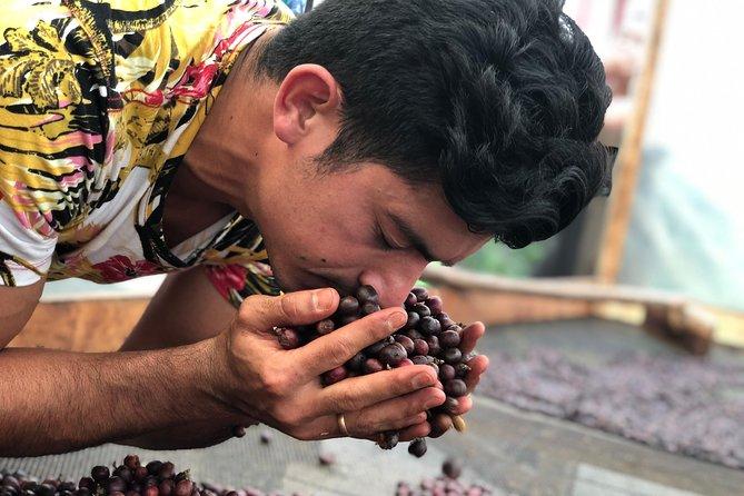 Coffee tour in Bogota - Jaguar