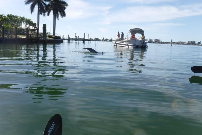 Guided Kayak Eco Tour in Florida
