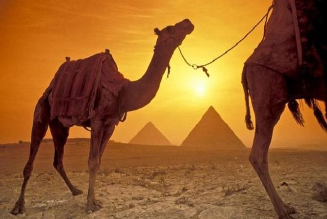 Sunrise camel ride with half day great pyramids and sphinx
