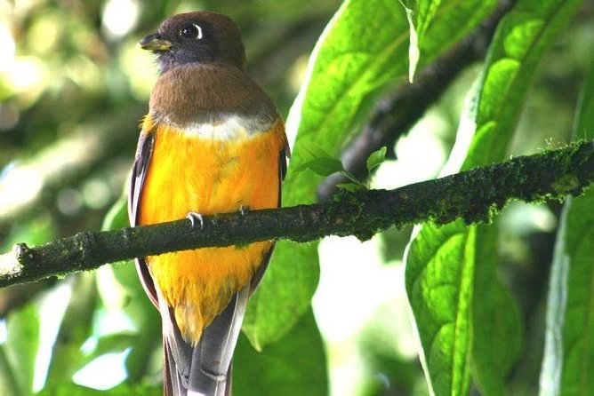 Tour to the Curricancha Reserve in Monteverde a paradise for birdwatchers