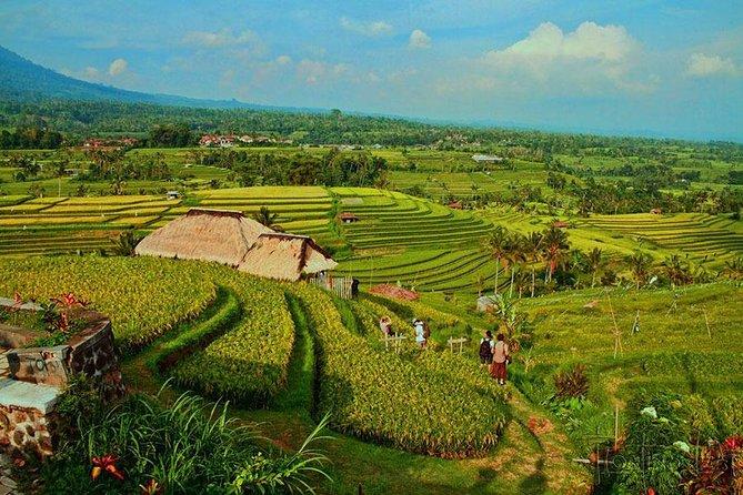 Jatiluwih Rice Terrace Tour