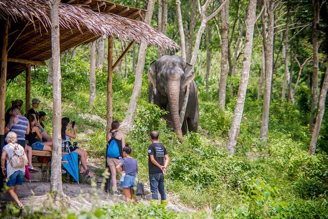 A Morning with the Elephants at Phuket Elephant Sanctuary