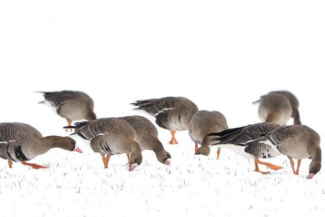 Winter Birding Day Trip to Dobrudja from Tulcea/Constanta