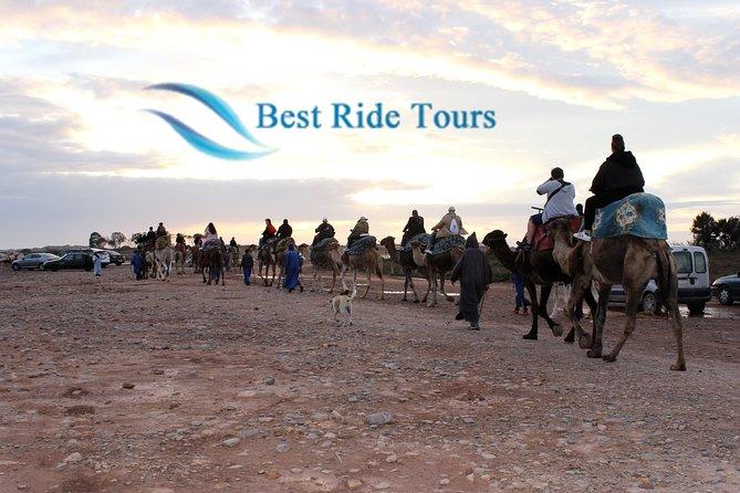 Agadir Camel Riding