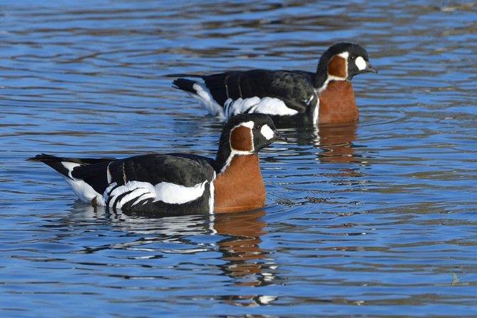 Short Break: 2d/1n Geese & Winter Birds in Dobrudja