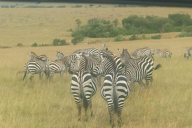 5 Days Thrilling Safari in Maasai Mara Lake Nakuru, Lake Naivasha , Kenya