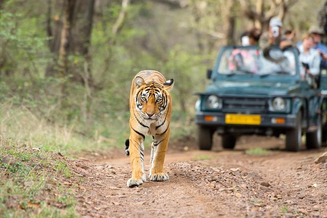 5-Days Golden Triangle Tour with Ranthambore(Delhi Agra Jaipur Ranthambore Tour)