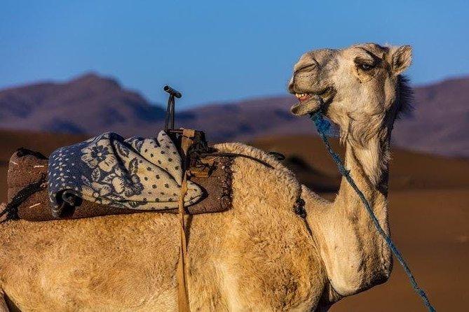 Camel Ride & Barbecue In Agadir