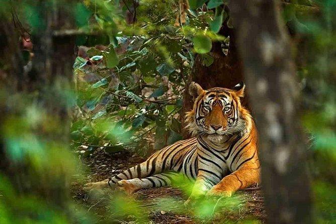 4 Days Golden Triangle with Ranthambore Tiger Tour { Delhi.Agra,Jaipur }