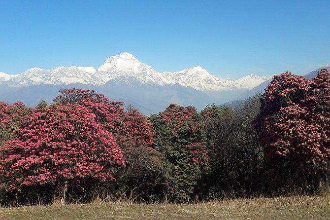 4-Days Trekking to Poon Hill & Ghandruk